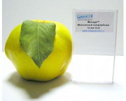 Монолитный поликарбонат ТМ Polygal 2 мм прозрачный